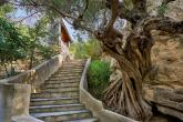 Vibrant energy and penetrating light, 7day yoga and kirtan holidays retreat in Crete - photo 2