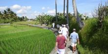 Follow Your Dreams retreat in Ubud - photo 3