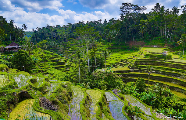 Freedom and rejuvenation: 7 days in Ubud, Bali, 25-31 December